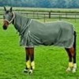 Show details for Blanket to protect the horse from insects