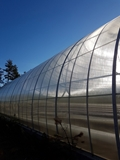 Picture for category Greenhouses, nursery cartridges, glass